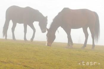Na Veľký piatok chlapi brodili kone a dievky sadali do kaluží