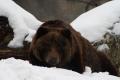VIDEO: Národnú zoo v Bojniciach môžete navštíviť i v tomto období