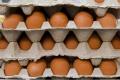 Slovensko bolo v roku 2015 v produkcii vajec sebestačné