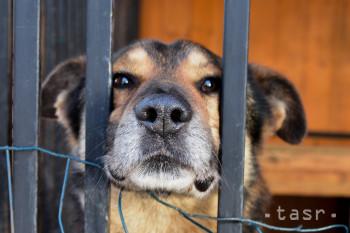 Popri záchrane zvierat šíri OZ Túlavá labka aj osvetu o ich ochrane