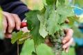Vinársku sezónu otvorí Stredoveká prešovačka