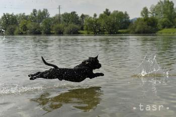 VIDEO: Vo Vranove nad Topľou lovia poľovníci vodnú zver vďaka psom
