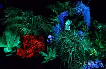VIDEO: Botanickú záhradu v Košiciach rozžiarili svetielkujúce rastliny