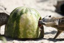 Chladený melón je TOP
