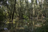 Vybrežená rieka Morava pod hradom Devín