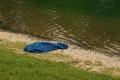 Za ZŠ v Snine našli utopeného 54-ročného muža. Bol celý dobitý