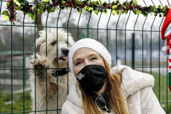 Útulok Slobody zvierat mal tento rok historicky najväčší počet adopcií