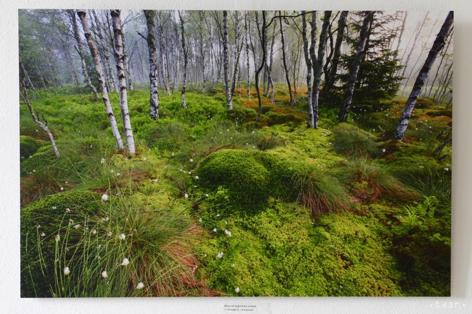 Sólymos a Matečná sa nezhodli ohľadom ochrany lesov
