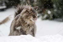 Chutný sneh