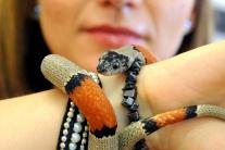 Výstava hmyzožravé rastliny a exotické živočíchy v