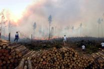 Lesný požiar