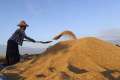 EÚ sa bráni proti nadmerným dovozom ryže z Kambodže a Mjanmarska