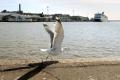Nemecké automobilky chcú na prepravu využívať plachetnice