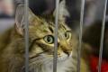 V Bratislave cez víkend odchytili a vykastrovali ďalšie mačky