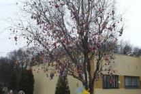 Rekordný strom v Pavlovciach