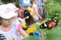 V Botanickej záhrade UPJŠ  odštartoval ďalší ročník motýlej šou