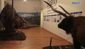 V Prírodovednom múzeu SNM spoznáte obrovské zvieratá z ľadovej doby