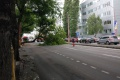 Zelený vinník: frekventovanú cestu v Bratislave blokuje spadnutý strom