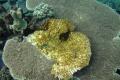 Obama pri Havaji vytvoril najväčšiu morskú rezerváciu sveta