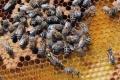 Ovocinár zabil státisíce včiel, rakúsky súd ho poslal do väzenia