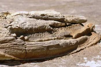 Peruánci chcú chrániť nálezisko fosílií pred účastníkmi Rely Dakar