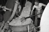 Zber cukrová repa ČSSR