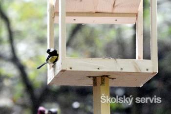 V bratislavskom lesoparku vyrástla pozorovateľňa vtáctva
