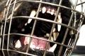 Prípad dohryzeného ornitológa: Na majiteľa psov podajú obžalobu