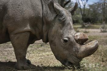 Zoologická záhrada v Bratislave má novú samicu nosorožca