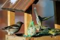 R. Sobota: Výstava prezentuje kŕmidlá pre vtáky vyrobené žiakmi