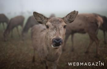 Zábery z jelenej farmy: Takto sa získava mäso!