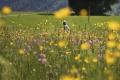 Invázne rastliny ohrozujú slovenskú flóru, niektoré druhy môžu vyhynúť