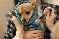 Módna prehliadka oblečenia pre psov v New Yorku