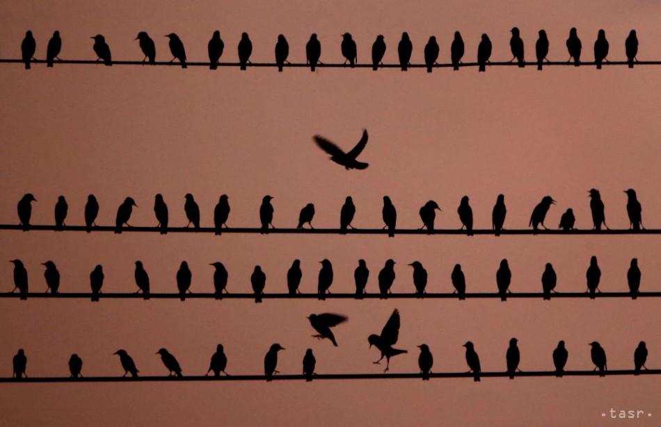 Veľké vtáky a dievky čierna pusy dievčatá