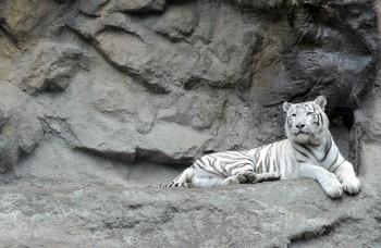 Slovenské zoologické záhrady sa oplatí navštíviť