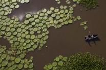 Zakvitnuté jazero v Paraguaji