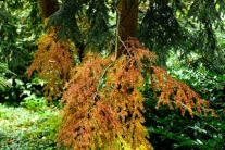 Jeseň v Arboréte Mlyňany