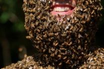Как сажать пчел на спину 111