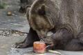 V bojnickej zoo dostal medveď za útek smrtiacu guľku