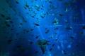 Na Kamčatke otvorili múzeum znečistenia oceánov