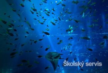 Spolu máme silu chrániť oceán!, zdôrazňuje téma Svetového dňa oceánov